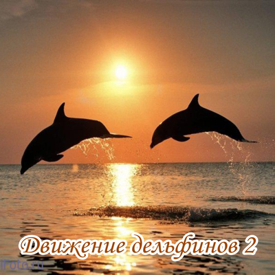 dolphins2_400